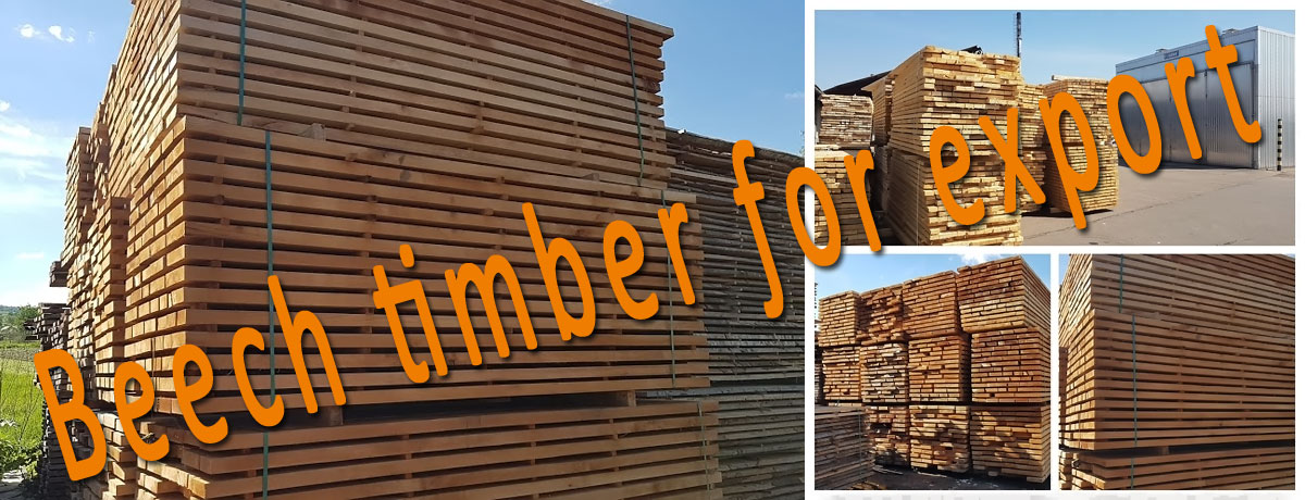 Beech timber for export